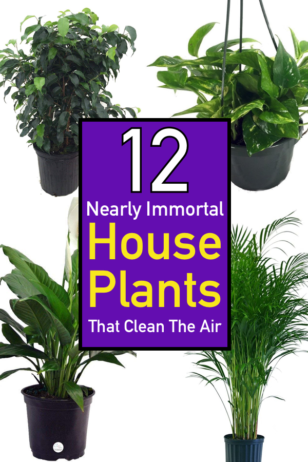 12 Nearly Immortal House Plants That Clean The Air The Unlikely
